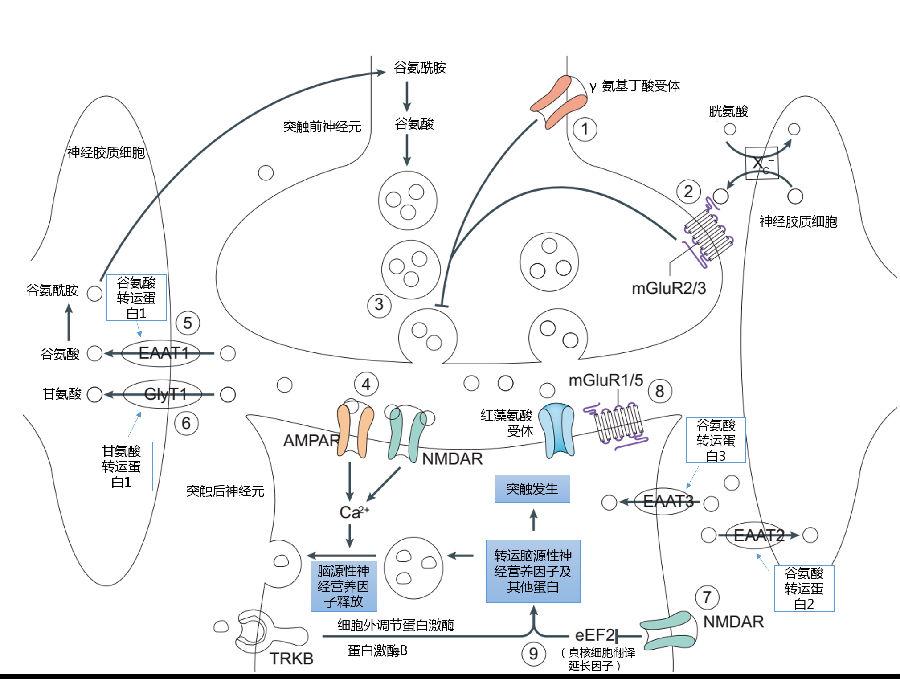 甘氨酸结构立体图