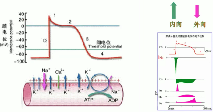 电路 电路图 电子 设计 素材 原理图 699_369